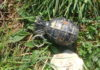 Rucna granata M75