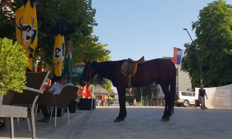 acin konj