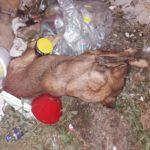 Sapa uginuli psi