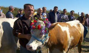 Mis za najlepšu kravu Uroševac