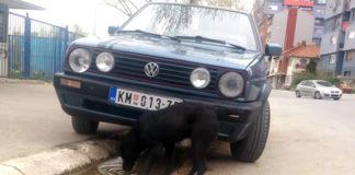 Psi pas Mitrovica