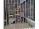 Lav u Gnjilanu
