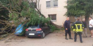 Leposavić palo drvo